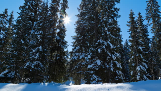 tracking shot along fir trees covered with snow - meribel stock videos & royalty-free footage