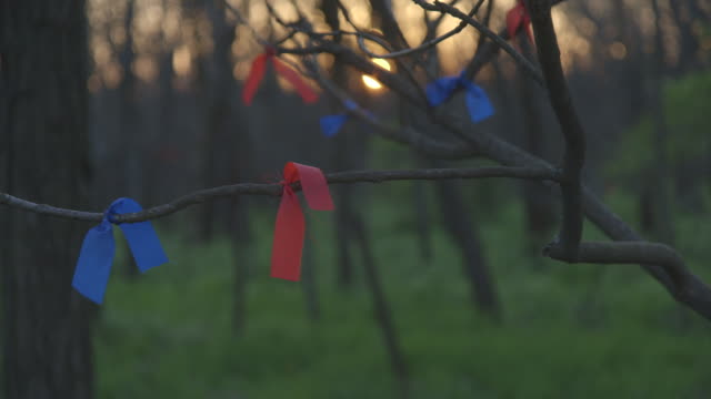 tracking shot along ribbons tied to a tree branch. - tied bow stock videos & royalty-free footage