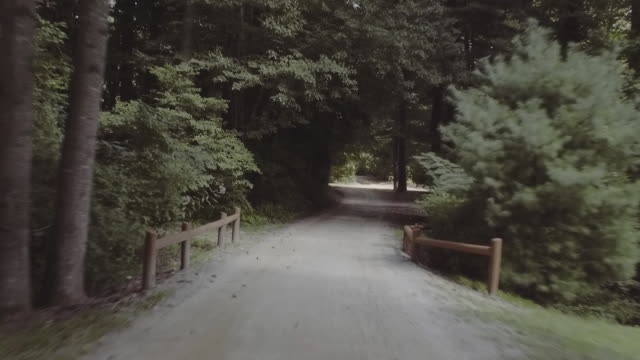 tracking shot along summer camp forest road - summer camp stock videos & royalty-free footage