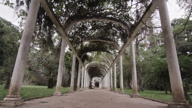 tracking shot centered in walkway going through the arches in jardim botanico in rio - botanical garden stock videos & royalty-free footage
