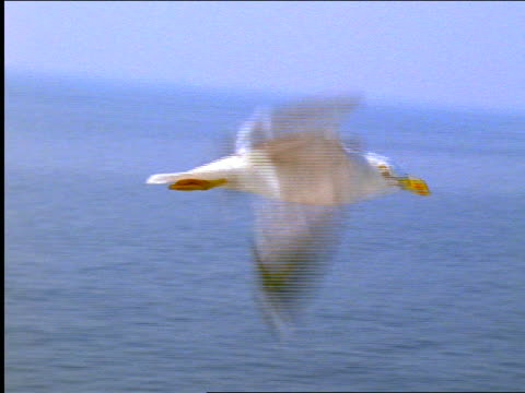 tracking shot close up seagull flying over water / greece - one animal stock-videos und b-roll-filmmaterial