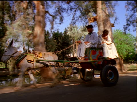 stockvideo's en b-roll-footage met canted tracking shot donkey pulling two egyptian boys sitting on cart on dirt road / egypt - werkdier