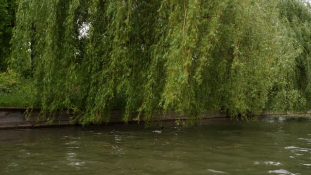 tracking shot moving along the river cam, cambridge. - trauerweide stock-videos und b-roll-filmmaterial