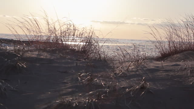tracking shot of a beach and tall grass. - model released - 1920x1080 - hd - goodsportvideo stock videos and b-roll footage
