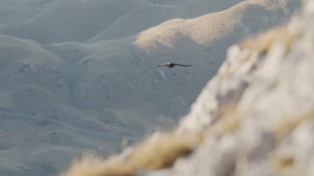 vidéos et rushes de capture d'un oiseau noir volant dans le parc national de durmitor - parc national
