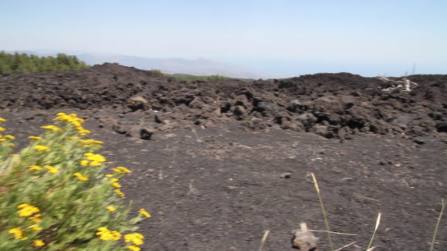 Tracking shot of a lava flow and new life, vegetation appearing on the slopes of Mount Etna, Sicily