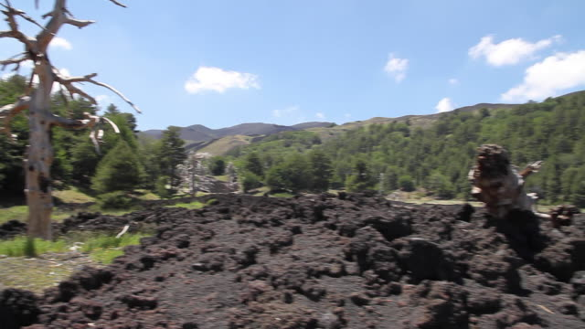 tracking shot of a lava flow, logs and a dead tree on the slopes of mount etna, sicily - bare tree stock videos & royalty-free footage