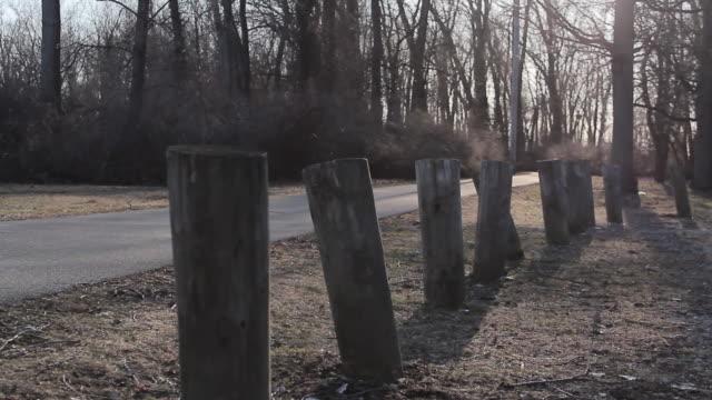 vidéos et rushes de tracking shot of a road, trees, piling stumps. - model released - 1920x1080 - hd - fondu d'ouverture