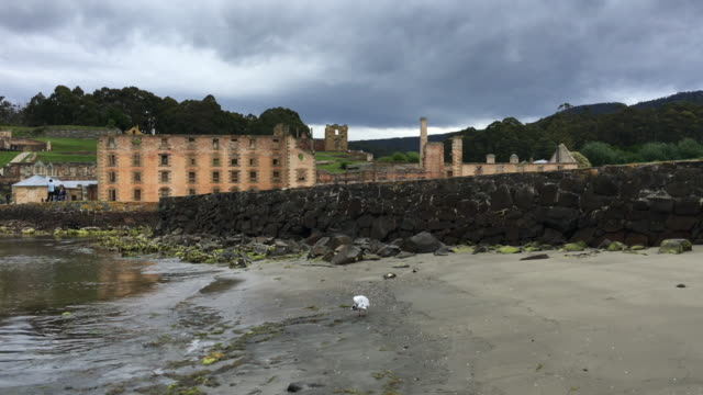 4k tracking shot of a sea gull on a small beach in front of the penitentiary, port arthur historic site - prison building stock videos & royalty-free footage