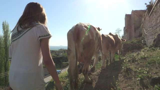 Tracking shot of a teenage girl herding cattle