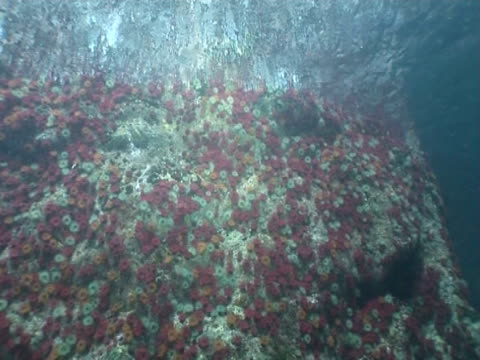 tracking shot of anemones on a wall in gouliot caves