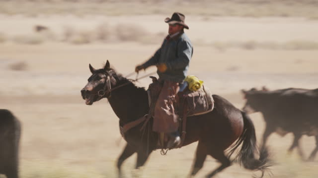 tracking shot of cowboy herding stray cow on ranch / fish lake, utah, united states - カウボーイ点の映像素材/bロール