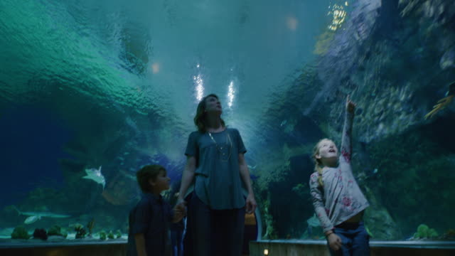 vídeos y material grabado en eventos de stock de tracking shot of mother and children walking in aquarium tunnel with fish swimming overhead / draper, utah, united states - curiosidad