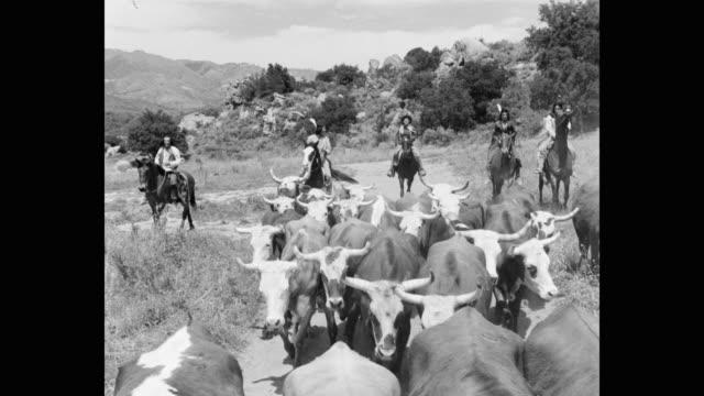 vídeos y material grabado en eventos de stock de tracking shot of native american people herding cattle - western usa