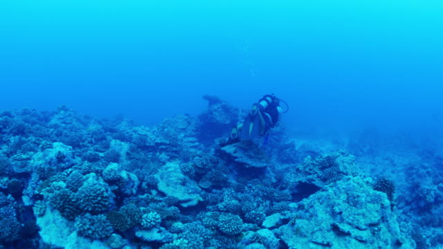 tracking shot of scuba diver swimming in ocean / moorea, french polynesia - moorea stock videos and b-roll footage