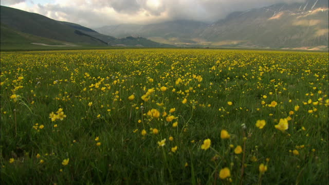 """tracking shot of stunning open valley with mountains, overhanging clouds and a meadow full of yellow flowers"" - ウンブリア州点の映像素材/bロール"