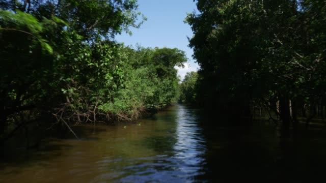 vídeos de stock, filmes e b-roll de tiro de rastreamento de áreas úmidas na amazônia (igarape e igapo) - floresta pluvial