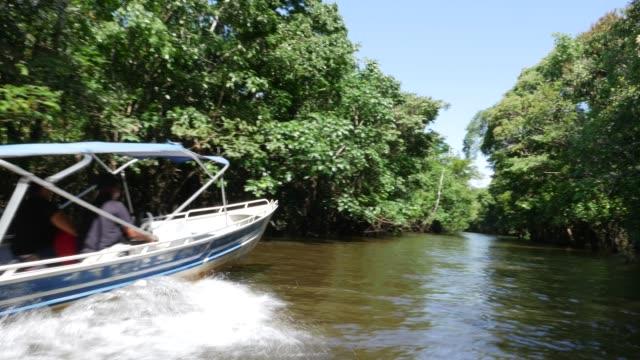 vídeos de stock, filmes e b-roll de tiro de rastreamento de áreas úmidas na amazônia (igarape e igapo) - região amazônica