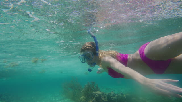 vídeos de stock, filmes e b-roll de tracking shot of woman snorkeling underwater in ocean then surfacing / tobago cays, saint vincent and the grenadines - rosa cor