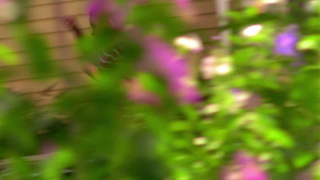 vídeos de stock, filmes e b-roll de tracking shot older girl chasing young boy through yard + past tree - brincadeira de pegar