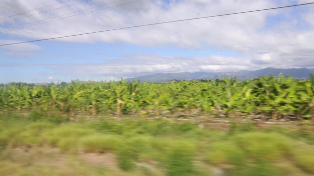 santo domingo dominican republic november 30 2012 a tracking shot out of a driving car of a banana plantation in the dominican republic mountains are... - hispaniola stock videos and b-roll footage