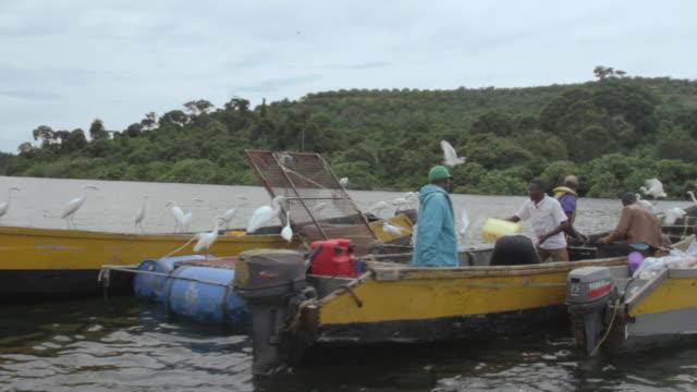 tracking shot past a flock of little egrets (egretta garzetta) surrounding fishermen as they sort out their catch on lake victoria. - 男漁師点の映像素材/bロール