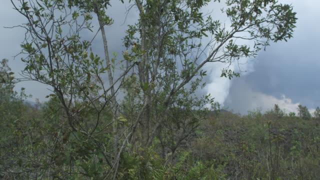 vídeos y material grabado en eventos de stock de tracking shot past tree to smoking volcano, nyamuragira, democratic republic of congo, 2011 - volcán activo