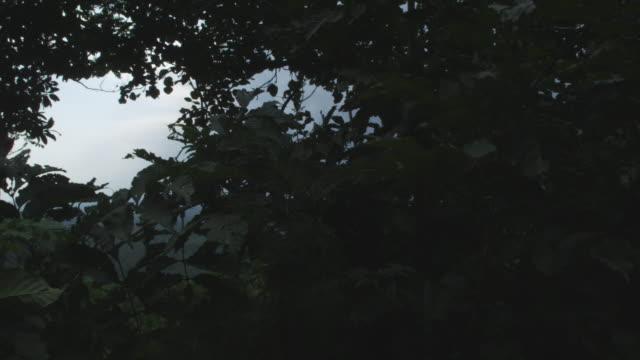 vídeos y material grabado en eventos de stock de tracking shot past vegetation to distant smoking volcano, nyamuragira, democratic republic of congo, 2011 - volcán activo