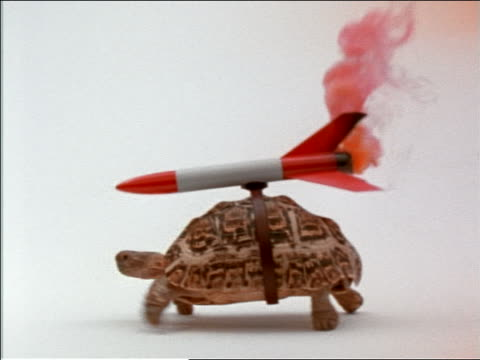 vidéos et rushes de tracking shot profile tortoise with flaming + smoking rocket strapped to shell walking in studio - tortue