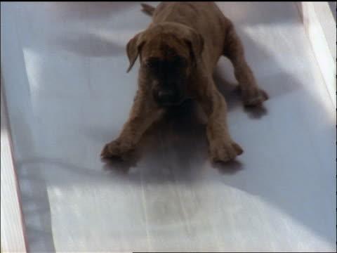 tracking shot puppy coming down slide towards camera - 滑る点の映像素材/bロール