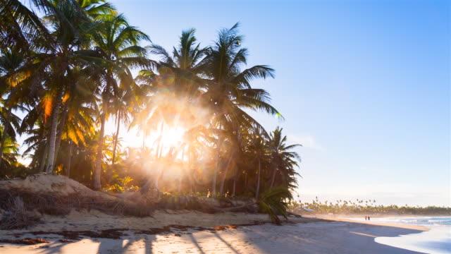 stockvideo's en b-roll-footage met tracking shot, sun shining through palm trees at tropical beach - caraïbische zee