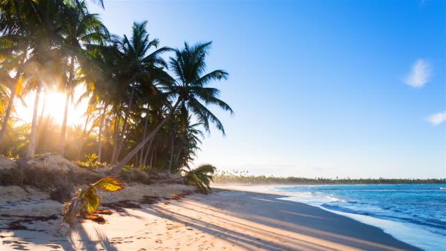 tracking shot, sun shining through palm trees at tropical beach - karibisches meer stock-videos und b-roll-filmmaterial