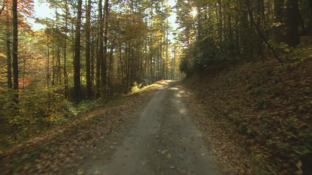 vidéos et rushes de tracking shot through woods over quiet dirt road with autumn light. - route à une voie