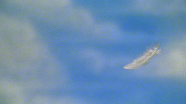 MS tracking shot white feather falling with blue sky in background