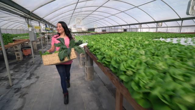 WS Tracking Shot Young Asian woman walking through a hydroponic farm