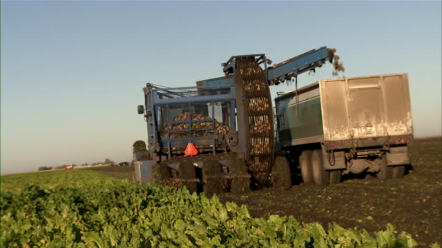 cu of tractor and truck harvesting sugar beets in the field. - beet stock videos & royalty-free footage