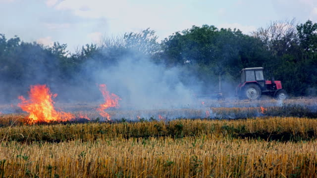Tractor at burning field of dry grass