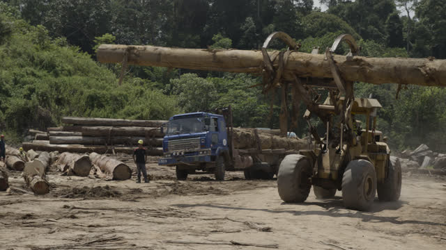 tractor carries tree trunk to pile, borneo. - audio available stock videos & royalty-free footage