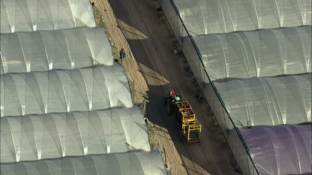 aerial zo tractor delivering crates of strawberries between rows of plastic greenhouses, stellenbosch, western cape, south africa - stellenbosch 個影片檔及 b 捲影像