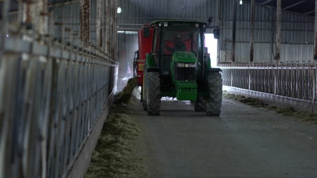 tractor feeding in dairy farm. - cow stock videos & royalty-free footage