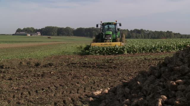 ms tractor harvesting sugar beet in field / rhisnes, walloon area, belgium - beet stock videos & royalty-free footage