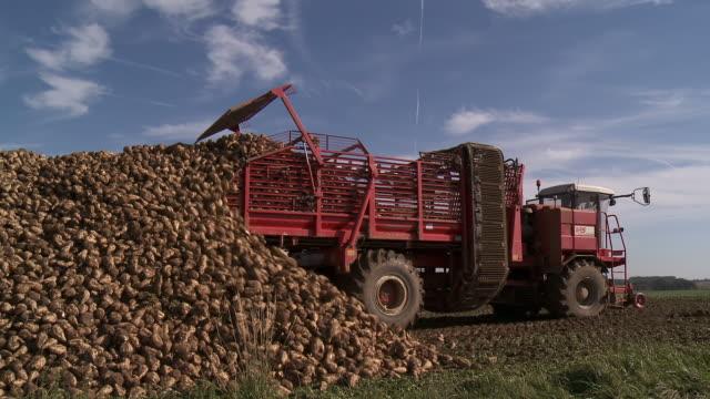 MS Tractor harvesting sugar beet in field / Rhisnes, Walloon area, Belgium