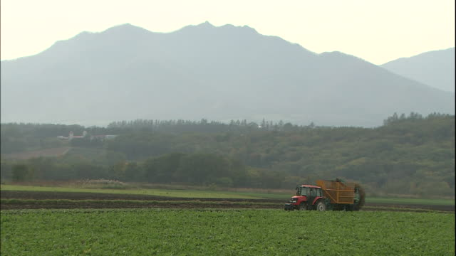 a tractor harvests beets in a field in hokkaido, japan - 農作業点の映像素材/bロール