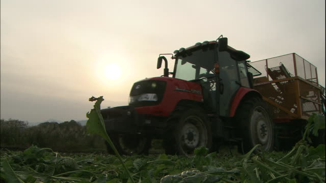 A tractor harvests beets in Hokkaido, Japan in the evening.