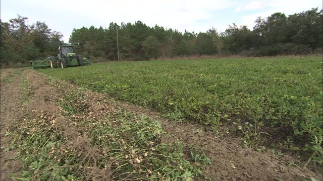 a tractor harvests peanuts. - 食品 ピーナッツ点の映像素材/bロール