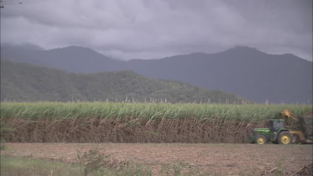 vídeos de stock, filmes e b-roll de a tractor harvests sugarcane. - sugar cane