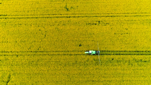 tractor in field spraying rapeseed