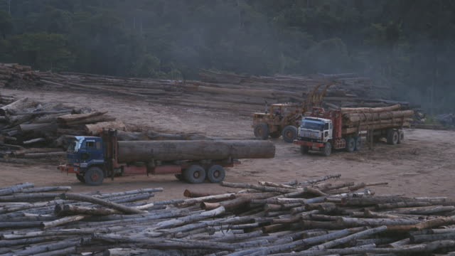 ws tractor loading truck with felled logs at logging yard / tawau, sabah, malaysia - sabah state stock videos and b-roll footage