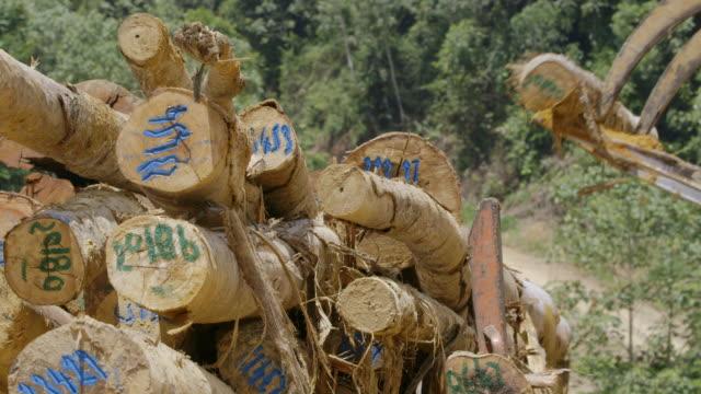 CU Tractor loading truck with felled logs / Tawau, Sabah, Malaysia