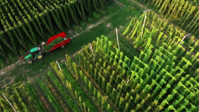 tractor making a turn, to harvest another line of hops field - hops crop stock videos and b-roll footage